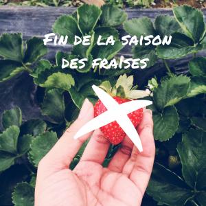 Fin de la saison des fraises